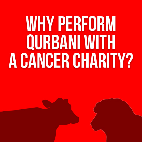Qurbani with IKCA. Qurbani with Confidence