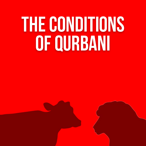 The Conditions of Qurbani (FAQs)